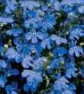 Top 10 beautiful shade – loving flowers