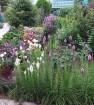 Сад в августе