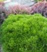 Формировка растений