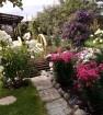 Несколько видов цветущего сада