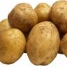 Картофель семенной Уладар