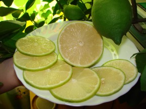 Лимон сорта лунарио
