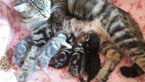 Киса соня с котятками