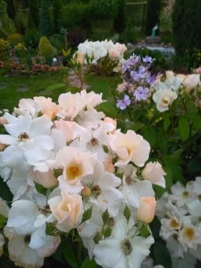 Роза салли холмс