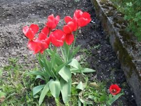 Весна 2017