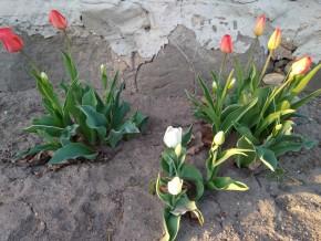Весна 2018